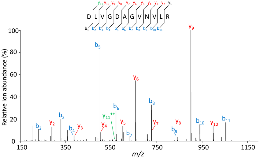 MS-MS-spectrum-of-the-semi-tryptic-peptide